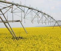 APPA lamenta las limitaciones a los biocarburantes convencionales propuestas por la Eurocámara