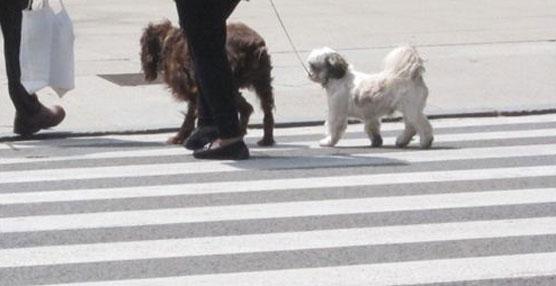 El Ayuntamiento de Palma permitirá a los dueños de perros subir con ellos a algunos autobuses