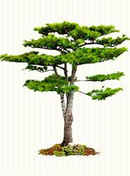 Sigaus planta 1.000 árboles en su Tercer Bosque, ubicado en el Área Natural del Lazarejo, en Madrid