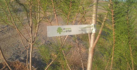El Bosque Scania suma más de 4.000 árboles correspondientes a los vehículos vendidos en 2014