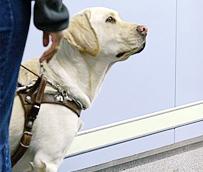 Los perros de asistencia para cualquier tipo de discapacitado ya pueden acceder al autobús en Madrid