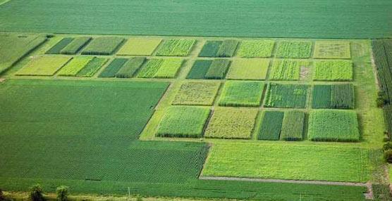 El Parlamento Europeo restringe la producción de biocombustibles de primera generación