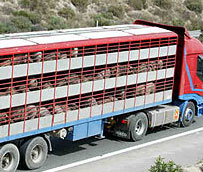 Las asociaciones de transportistas rechazan el nuevo proyecto de regulación del transporte de animales, según Fenadismer