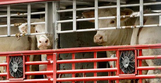 Transportistas rechazan el nuevo proyecto de regulación del transporte de animales