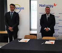 Naturgy, Enagas y Exolum: primera gran alianza de hidrógeno verde