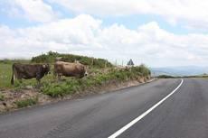 Carretera gallega