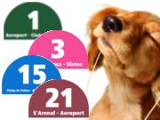EMT Palma permite el acceso de perros en sus autobuses