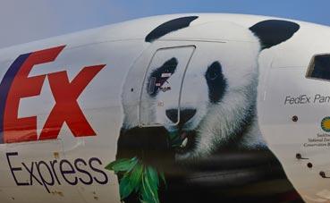 El panda Bei Bei, a bordo de FedEx Panda Express